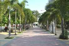 BolivarySucre 2020-05-21 at 7.42.28 AM (1).jpeg
